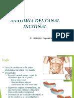 Canal Inguinal