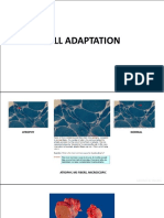 PATHO LAB - CELL ADAPTATION^J INJURY and DEATH
