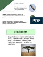 Ecosistema y Relaciones