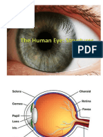 the human eye powerpoint notes