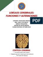 11. Lobulos Cerebrales