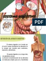 Fisiologia(1) Sistema Digestivo