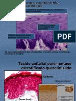tecido_epitelial.partedoisset2007.pptx