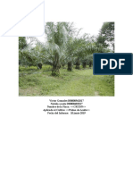 Analisis Suelo en Palma de Aceite
