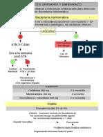 Protocolo Bacteriuria Asintomática