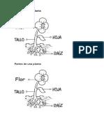 Guia Ciencias Primero Partes de Una Planta (1)
