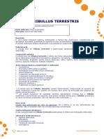 Tribullus Terrestris