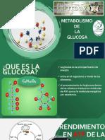 Metabolismo de GLUCOSA