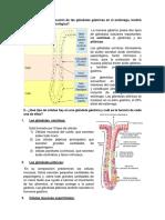 cuestionario fisio - gastro - usmp
