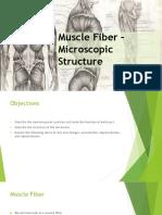m5 muscle fiber microscopic structure