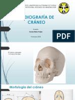 CRANEO PROYECCIONES.pdf
