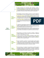 Tejido conjuntivo.pdf