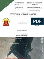 ecosistema de bahia paracas