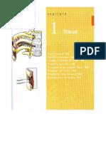 Cap 1 Torax - Anatomía Moore Parte Dos
