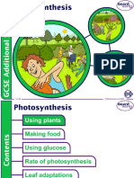Boardworks Photosynthesis