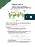 317873_fosforilasi Oksidatif