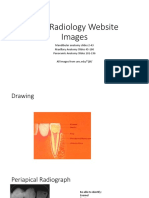 Radiology Interpretation Copy