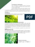 Diferencia Entre Fotosintesis y Respiracion