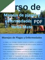 Curso Manejo de plagas en Yerba Mate.ppt
