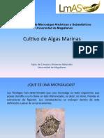 Clase Microalgas