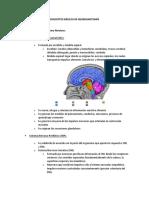 Resumen Conceptos Básicos de Neuroanatomía
