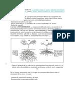COMPACTACION_DE_SUELOS_mecanica.docx