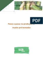 PASSO A PASSO NA PRODUÇÃO DE MUDAS PRÉ-BROTADAS