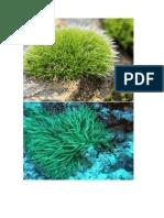 Musgos y Algas