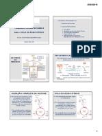 Aula 10 - Ciclo do Ácido Cítrico UEPB.pdf