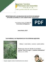 11. Importancia de Las Malezas en Cultivos de Banano