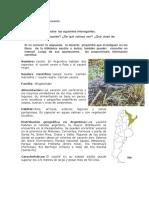 CLASE etica yacares- gama.docx