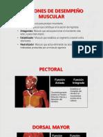 Funciones de Desempeño Muscular