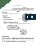 GUIA 8vo - CCNN - La célula.docx