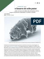 Tardígrados- Colonos Lunares de Ocho Patas - Ciencia - EL PAÍS