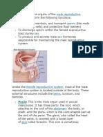 male reproductive.docx