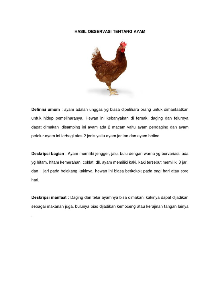 Hasil Observasi Tentang Ayam Docx
