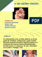 semiologia cuello torax abdomen-1.pptx