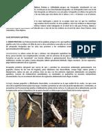 Caracteristicas Ordenes (3).pdf