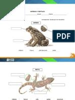 Dibujos reptil y anfibio sus partes.docx
