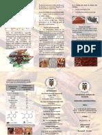 triptico Cacao Modelo.docx