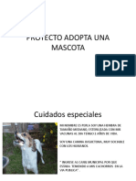 Proyecto Adopta Una Mascota