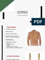 Anatomía de la columna vertebral