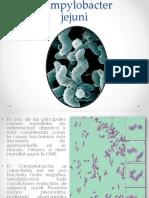 Presentacion de Bacteria Campylobacter Jejuni