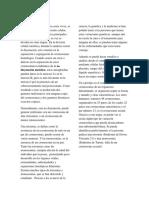 CEOMOSOMAS-INFORME-BIOLOGÍA