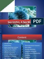 PPT-Sea Urchin a Sea Wonder