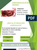 El Desarrollo Embrionario en El Ser Humano Trabajo Practico