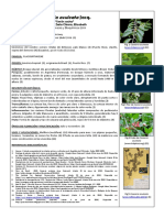 Casearia aculeata Jac1.docx