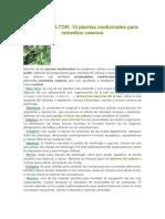 Eco Agricultor - Plantas Medicinales