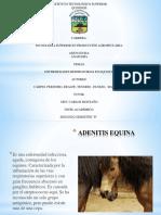 EQUINOS.pptx