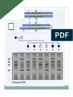 PCR_y_alelos_lectura.pdf